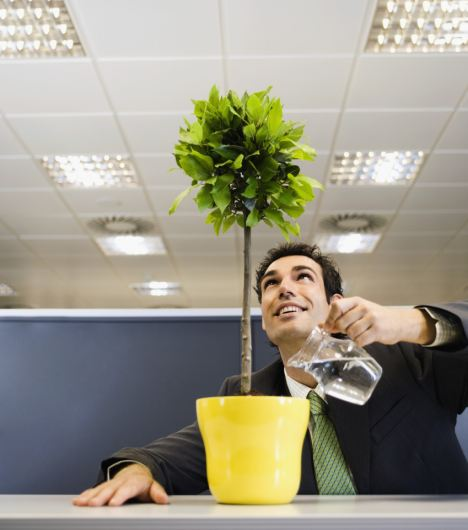 Businessman Watering Plant in an Office Cubicle --- Image by © Randy Faris/Corbis