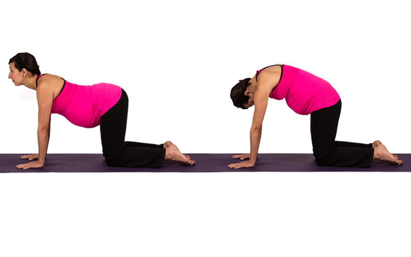 5 Easy & Recommended Yoga Postures to Start an Energetic ...