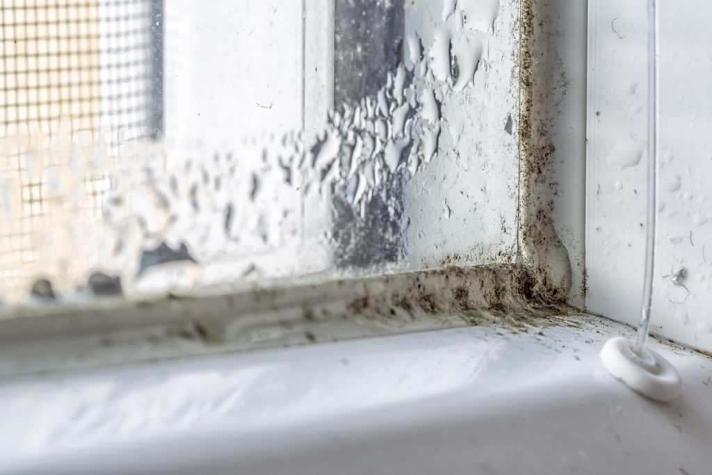 How to Remove Mildew or Mold from Glass